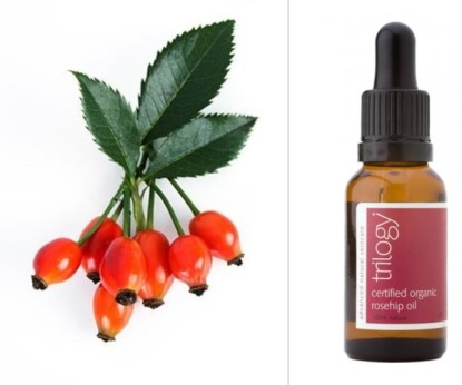 Natural Skin Care Ingredients - Rosehip available at SkinMedix.com